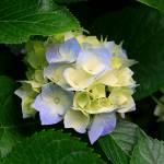 Tasmin ara Profile Picture