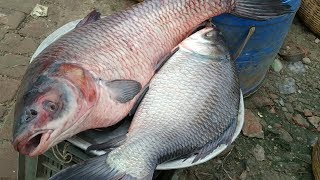 Amazing Fish Market Review Khulna - Big Fish Availability & Price In Fish Market - True Fishing BD
